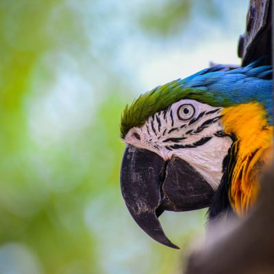 Pandemonium of Parrots at Birdland, Glos