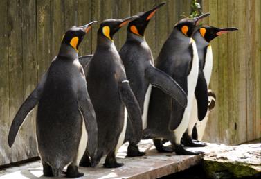 penguin queue - Penguin Week this May Half Term (29th May – 6th June)