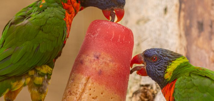 Parrots Facts at Birdland Park & Gardens