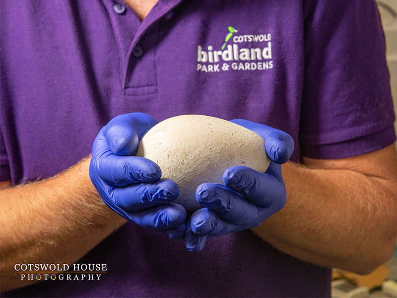 king penguin egg at birdland - Penguin Chick Hatches Out!