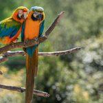 parrots 150x150 - BIRDLAND RE-OPENING