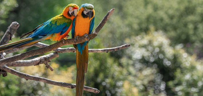 Parrots at Birdland park & Gardens in the Cotwolds